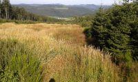 Wanderung zum Clemensberg(838m N.N)Entfernung ca. 3km bis zum Gipfel - Bild 19: Ferienhaus Woodland Lodge mit eingezäuntem Garten in Winterberg-Niedersfeld