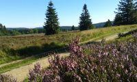 Nahegelegenes Naturschutzgebiet Hochheide läd zum Wandern ein - Bild 19: Ferienhaus Woodland Lodge mit eingezäuntem Garten in Winterberg-Niedersfeld