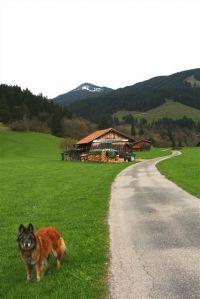 """unzählige markierte Wanderwege ab Haus - Bild 7: Ferienhaus """"Häusl"""" in Pfronten im Allgäu"""