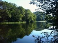 Das Gebiet um den Nahestausee ist Naturschutzgebiet. Wanderwege rundum bieten Ihnen Erholung und lassen Sie die Natur erleben. - Bild 13: Ferienhaus RITTER im oberen Nahetal