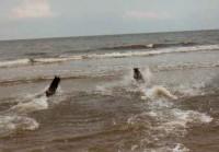 Bild 13: Fischerkate am Strand von St.Peter-Ording